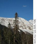 Купить «Снежные вершины Кавказских гор, Пихтовая Поляна», фото № 22505106, снято 1 апреля 2016 г. (c) DiS / Фотобанк Лори