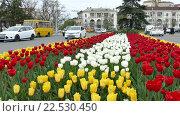 Купить «Цветущие тюльпаны на площади Ушакова в г. Севастополе», видеоролик № 22530450, снято 8 апреля 2016 г. (c) Александр Устич / Фотобанк Лори