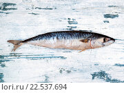Купить «Fresh mackerel on white wooden background.», фото № 22537694, снято 15 сентября 2019 г. (c) easy Fotostock / Фотобанк Лори