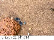 Купить «Солнцезащитные очки, забытые туристом на влажном песке пляжа», фото № 22541714, снято 26 декабря 2015 г. (c) Алексей Безрук / Фотобанк Лори