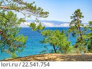 Вид на озеро Байкал сквозь зелёные ветви сосен с острова Ольхон, вдалеке видны горы. Стоковое фото, фотограф Алексей Безрук / Фотобанк Лори