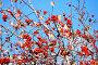 Ягоды рябины на фоне голубого неба, фото № 22545610, снято 26 июня 2017 г. (c) Зезелина Марина / Фотобанк Лори