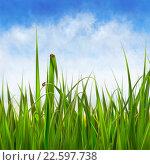 Купить «Зеленая трава. Голубое небо. Облака.», иллюстрация № 22597738 (c) Такшина Людмила Сергеевна / Фотобанк Лори