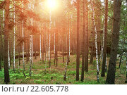 Купить «Смешанный лес  и камни», фото № 22605778, снято 18 августа 2009 г. (c) Зезелина Марина / Фотобанк Лори