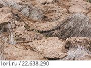 Вспаханная земля с травой. Стоковое фото, фотограф Юрий Коваль / Фотобанк Лори