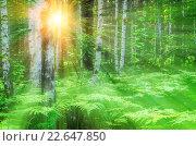 Купить «Солнечные лучи в березовой роще», фото № 22647850, снято 16 января 2019 г. (c) Зезелина Марина / Фотобанк Лори