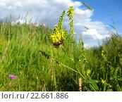 Пчела на цветке. Стоковое фото, фотограф Андрей Усачев / Фотобанк Лори
