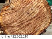 Следы пилы цепной на срезе ствола дерева. Стоковое фото, фотограф Kostin sergey aleksandrovich / Фотобанк Лори