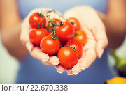 Купить «close up of woman holding cherry tomatoes in hands», фото № 22670338, снято 26 апреля 2015 г. (c) Syda Productions / Фотобанк Лори