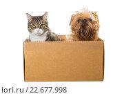 Купить «Кошка и собака сидят в картонной коробке», фото № 22677998, снято 9 апреля 2016 г. (c) Okssi / Фотобанк Лори