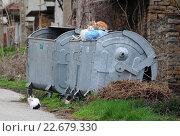 Купить «Болгария. Три бездомных кошки и мусорный контейнер», фото № 22679330, снято 15 марта 2016 г. (c) Victor Spacewalker / Фотобанк Лори