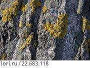 Текстура коры дерева с символом сердца из зеленого мха. Стоковое фото, фотограф Светлана Скрипник / Фотобанк Лори