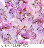 Бесшовный фон с розовыми орхидеями Phalaenopsis. Стоковое фото, фотограф Екатерина Голубкова / Фотобанк Лори