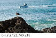 Купить «Большая морская чайка на скале на фоне моря и катера», фото № 22740218, снято 16 августа 2018 г. (c) Евгений Дробитько / Фотобанк Лори