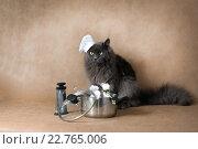 Кот готовит праздничный обед из белых мышей. Стоковое фото, фотограф Ольга Козина / Фотобанк Лори