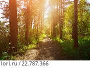 Купить «Лесной пейзаж - солнечный день с густом лесу», фото № 22787366, снято 5 мая 2016 г. (c) Зезелина Марина / Фотобанк Лори