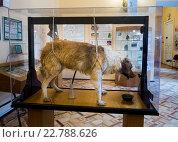 Собака Павлова - экспонат музея гигиены города Санкт-Петербург (2016 год). Редакционное фото, фотограф Вячеслав Палес / Фотобанк Лори