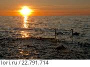 Купить «Силуэты лебедей на фоне заходящего солнца. Красивый морской пейзаж», эксклюзивное фото № 22791714, снято 6 мая 2016 г. (c) Svet / Фотобанк Лори