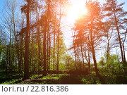 Купить «Летний лес», фото № 22816386, снято 5 мая 2016 г. (c) Зезелина Марина / Фотобанк Лори