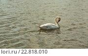 Купить «Белый лебедь на пруду», видеоролик № 22818010, снято 9 мая 2016 г. (c) Mikhail Davidovich / Фотобанк Лори