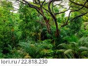 Купить «Lush tropical green jungle», фото № 22818230, снято 16 ноября 2015 г. (c) Andrejs Pidjass / Фотобанк Лори