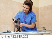 Купить «Veterinarian examining cat in veterinary clinic», фото № 22819202, снято 19 февраля 2016 г. (c) Andrejs Pidjass / Фотобанк Лори