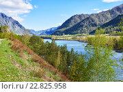 Купить «Река Катунь на Алтае / Altai river Katun near mountain village Chemal, Russia», фото № 22825958, снято 3 мая 2016 г. (c) Serg Zastavkin / Фотобанк Лори