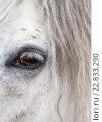 Глаз белой лошади крупным планом, фото № 22833290, снято 8 мая 2016 г. (c) Эдуард Паравян / Фотобанк Лори