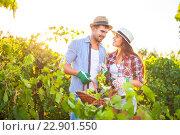 Купить «Молодая счастливая пара в винограднике во время сезона сбора урожая», фото № 22901550, снято 1 апреля 2020 г. (c) Дарья Петренко / Фотобанк Лори