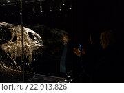 Berlin, Germany, visitors to the Natural History Museum at the Tyrannosaurus rex (2015 год). Редакционное фото, агентство Caro Photoagency / Фотобанк Лори