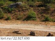 Тропинка в горах. Стоковое фото, фотограф Надежда Шапкина / Фотобанк Лори