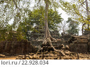 Храм Та Пром, Ангкор Ват, Камбоджа (2016 год). Стоковое фото, фотограф Михаил Пряхин / Фотобанк Лори