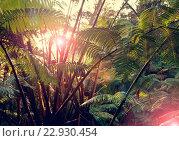 Купить «Jungle», фото № 22930454, снято 18 ноября 2019 г. (c) easy Fotostock / Фотобанк Лори