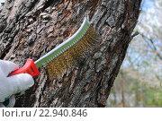 Купить «Чистка деревьев перед побелкой», эксклюзивное фото № 22940846, снято 4 мая 2016 г. (c) Юрий Морозов / Фотобанк Лори