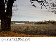 Осеннее поле. Стоковое фото, фотограф Екатерина Давыдова / Фотобанк Лори