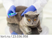 close up of vet making vaccine to cat at clinic. Стоковое фото, фотограф Syda Productions / Фотобанк Лори
