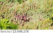 Купить «Поединок осы и жука», эксклюзивный видеоролик № 23048218, снято 7 июня 2016 г. (c) Юрий Шурчков / Фотобанк Лори