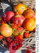Спелые яблоки, шиповник и калина в корзине. Стоковое фото, фотограф Елена Лобовикова / Фотобанк Лори