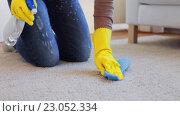 Купить «woman in gloves cleaning carpet or rug with rag», видеоролик № 23052334, снято 17 апреля 2016 г. (c) Syda Productions / Фотобанк Лори