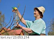 Купить «Пожилая женщина садовод опрыскивает молодую яблоню весной в солнечный день», фото № 23053214, снято 8 мая 2016 г. (c) Максим Мицун / Фотобанк Лори