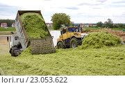 Разгрузка зеленой массы и уплотнение силоса. Стоковое фото, фотограф Андрей Силивончик / Фотобанк Лори