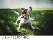 Купить «Собака на траве», фото № 23054462, снято 6 июня 2016 г. (c) Константин Колосов / Фотобанк Лори