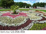 Купить «Цветочная клумба в парке «Сокольники». Красивый орнамент из цветов», эксклюзивное фото № 23058458, снято 5 августа 2015 г. (c) lana1501 / Фотобанк Лори