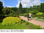 Купить «Пешеходная дорожка в регулярном парке Большого розария в Сокольниках в Москве», эксклюзивное фото № 23074686, снято 8 июня 2016 г. (c) lana1501 / Фотобанк Лори