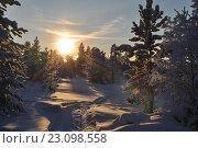 Закат в зимнем лесу. Стоковое фото, фотограф Светлана Пирожук / Фотобанк Лори