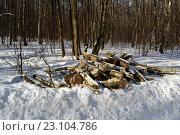 Весенняя санитарная рубка леса в московском парке. Стоковое фото, фотограф Иван Орехов / Фотобанк Лори