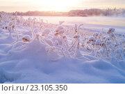 Купить «Зимний закат. Зимняя природа на закате», фото № 23105350, снято 9 января 2016 г. (c) Зезелина Марина / Фотобанк Лори