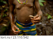 Купить «Life of Bayaka Pygmies in the equatorial rainforest, Central African Republic, Africa», фото № 23110542, снято 9 октября 2015 г. (c) age Fotostock / Фотобанк Лори