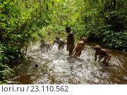 Купить «Life of Bayaka Pygmies in the equatorial rainforest, Central African Republic, Africa», фото № 23110562, снято 9 октября 2015 г. (c) age Fotostock / Фотобанк Лори
