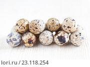 Купить «Перепелиные яйца на светлом деревянном фоне», фото № 23118254, снято 19 июня 2016 г. (c) Юлия Бочкарева / Фотобанк Лори